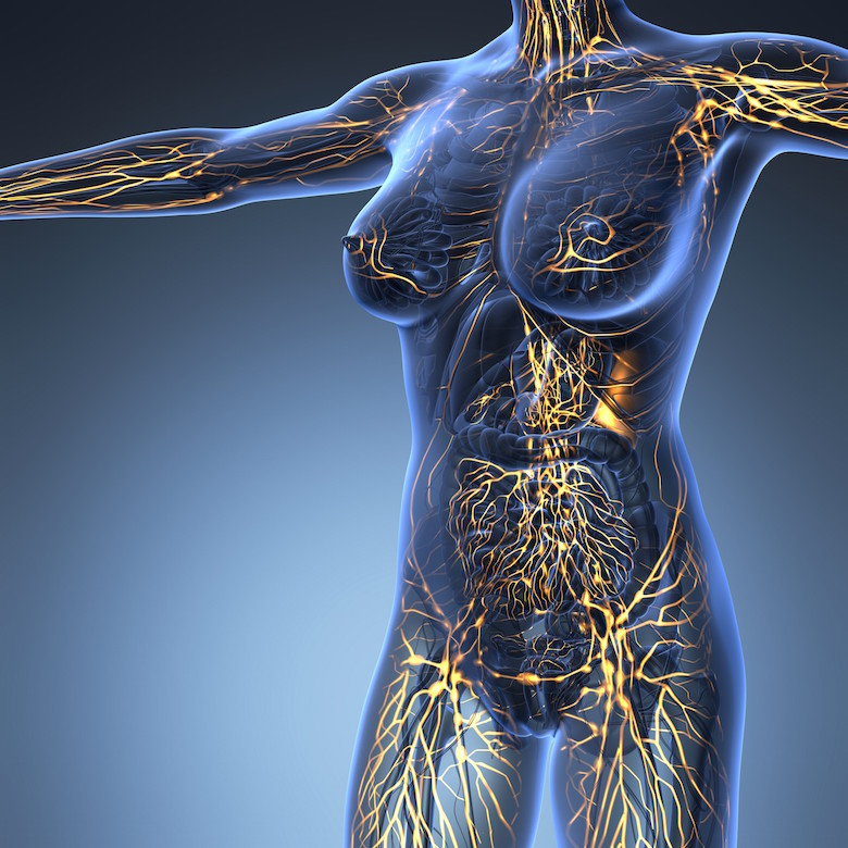 faq - anatomy and physiology of the lymphatic system - what is lymph - what causes lymph congestion