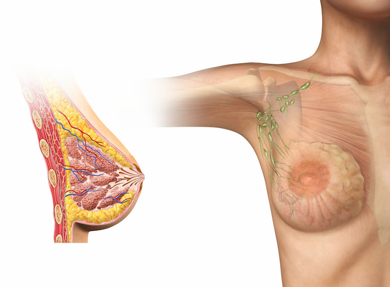 Lymphatic Diagram of the Breast Albuquerque Breast Health Post-operative recovery therapy
