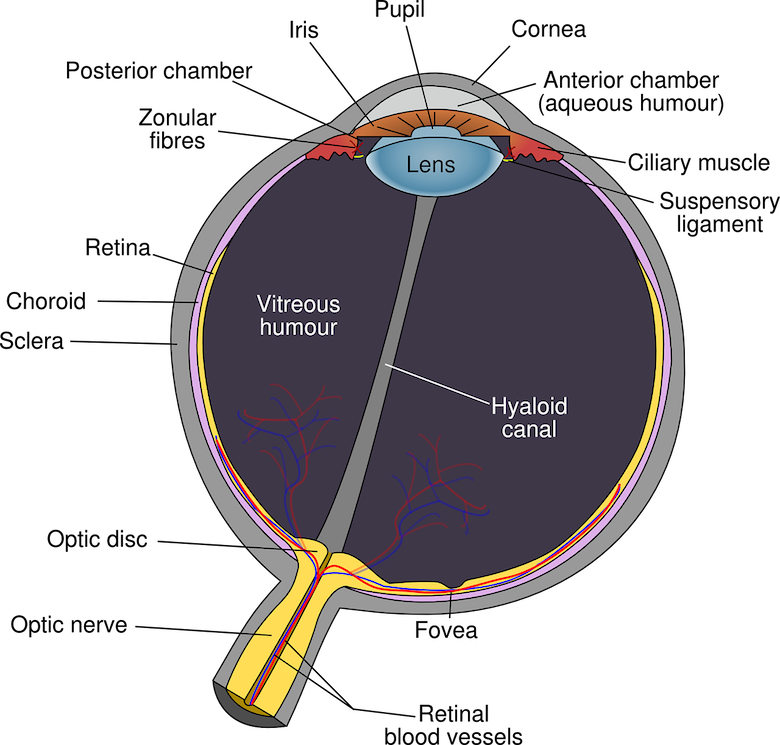 PEMF for optic nerve damage - PEMF for glaucoma - PEMF Therapy Benefits