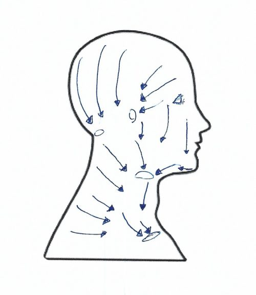lymphatic drainage pathways for the head and neck - facelift - What to Do When You Can't Get a Lymphatic Massage After Plastic Surgery