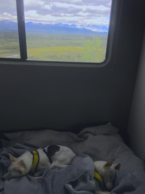 Pups in RV on the Denali Highway